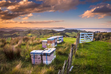 Vintage Colored Bee Hives On Top Of A Hill In Bay Of Islands New Zealand