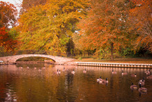 Scenic Autumn Duck Pond With F...