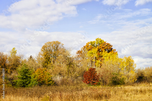 Foto op Canvas Herfst Field with beautiful wooded area in the autumn; vivid colors of of red, orange and yellow in the trees against a blue sky