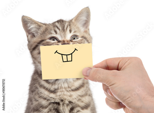 Foto op Aluminium Kat happy cat with funny smile on cardboard isolated on white