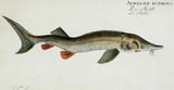 Ilustracja ryby. - 180694595