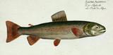Illustration of a fish. - 180694919