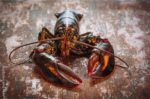 Foto Fresh raw lobster