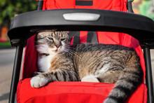 Cat In Kids Stroller On A Trip...