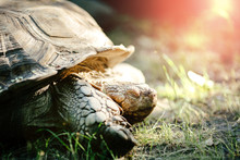Turtle Outdoors In Nature