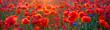 Leinwanddruck Bild - Poppy meadow in the light of the setting sun