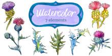 Wildflower Thistle Flower Fram...