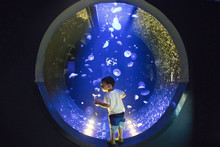 A Child Stands Amid A Large Ro...