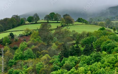 In de dag Lime groen Colina con árboles y cielo nuboso en otoño