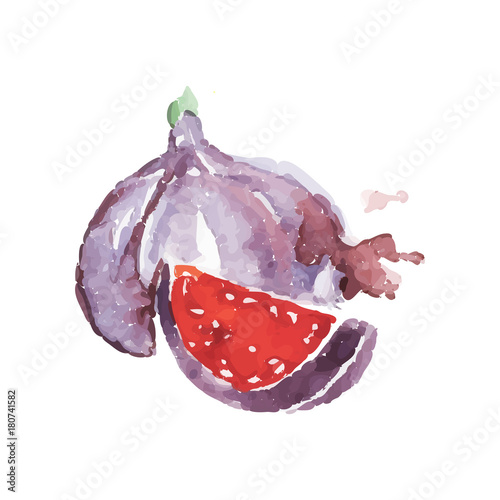 Ripe fig fruit watercolor hand painting vector Illustration Wall mural