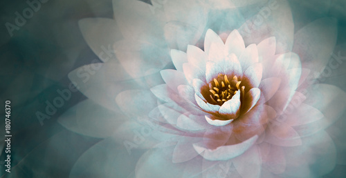 Deurstickers Lotusbloem pink lotus flower with a dreamy blue background