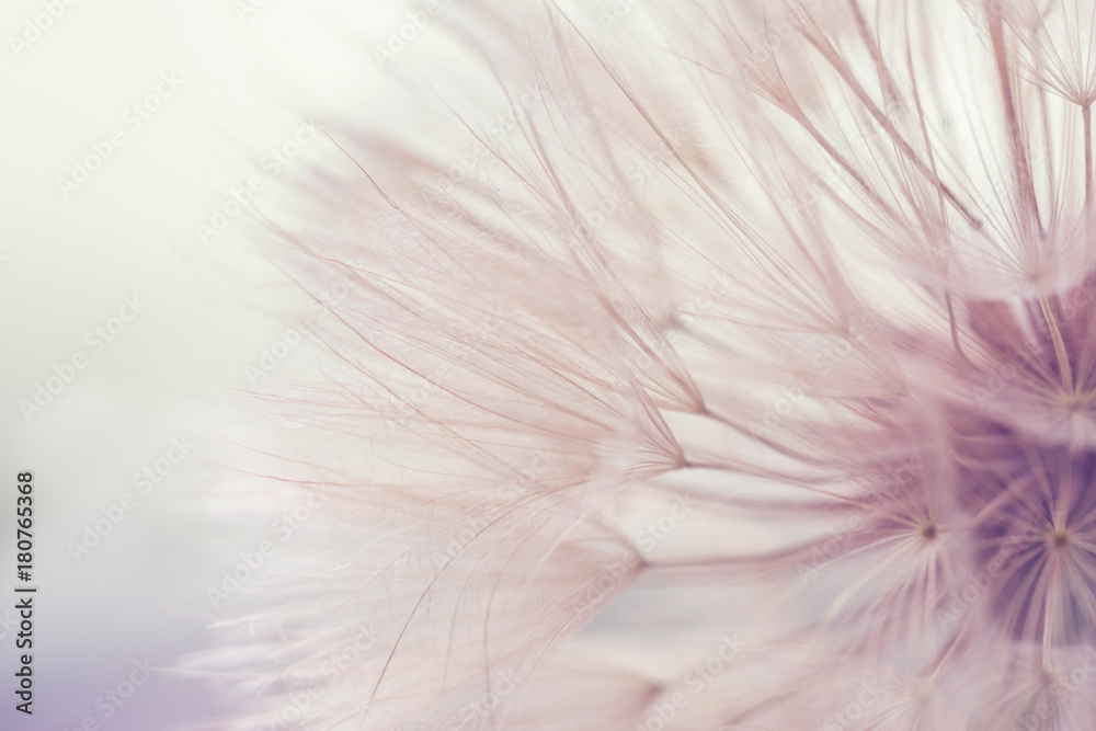 Fototapety, obrazy: Aerial dandelion on yellow, beige background. Toning. Relax, Air. Copy space