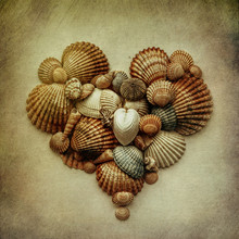 Close-up Of Shells Arranged In Heart Shaped