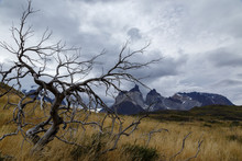Dead Tree With Torres Del Pain...