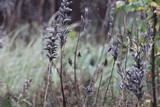 Wild Seeds, Finland - 180768593