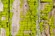 canvas print picture - Texture of old wooden fence with shabby paint. yellow