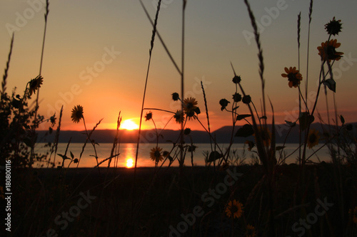 Fotografie, Obraz  Tranquil Autumn Sunflower Sunset