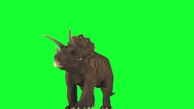 Dinosaurs Walking Alone On Green Screen To After Effects Composition