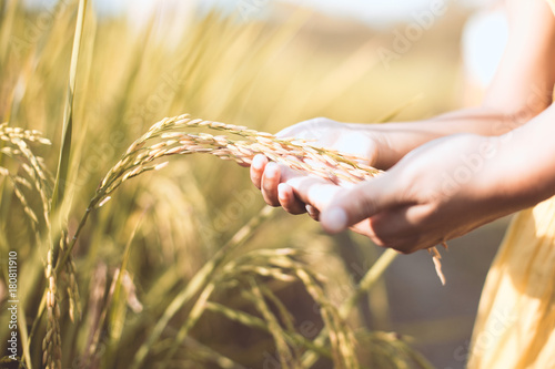 Carta da parati  Mother and kid hand holding young rice together with tenderness in the paddy fie