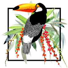 Toucan Bird And Tropical Plant