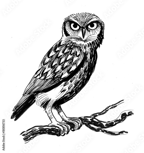 Canvas Prints Owls cartoon Ink illustration of an owl sitting on a tree