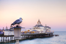 A Seagull Perched On A Lamp Po...
