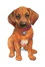 Watercolour Dog Puppy Rhodesian Ridgeback.