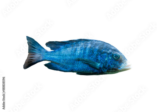 Poster Sous-marin The coral reef fish on white background, isolated