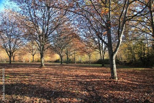 Papiers peints Bois Paysage d'automne.