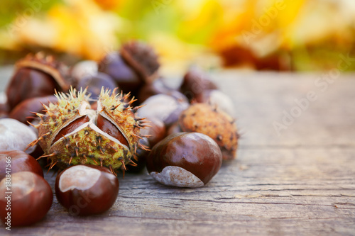 Chestnuts on wooden background Canvas Print