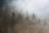 Piękny poranek lasu iglastego mglisty krajobraz. Zdjęcie zostało zrobione w Słowenii, UE. - 180850969