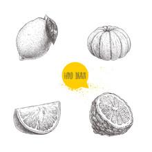 Hand Drawn Sketch Style Citrus Fruits Set. Lemon, Lime, Peeled Tangerine, Mandarine, Orange Slice And Bergamot Half. Vector  Illustration Isolated On White Background.