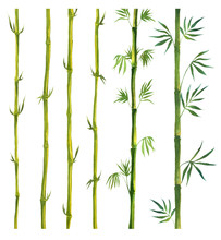 Green Bamboo Painted In Waterc...