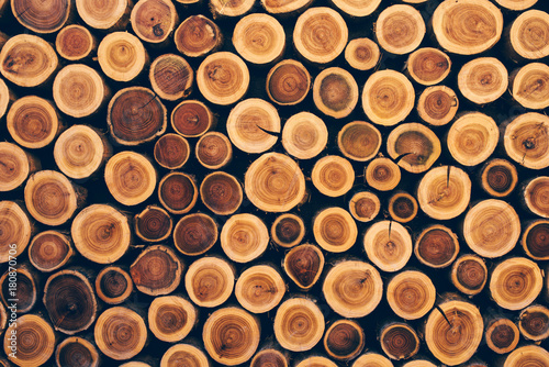 Foto op Canvas Brandhout textuur Stacked wood logs as texture