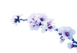 flores de almendro aisladas efecto vintage