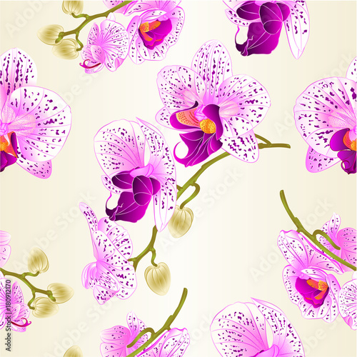Poster Abstract bloemen Seamless texture beautiful purple and white Orchid Phalaenopsis flower vintage vector closeup illustration editable hand draw