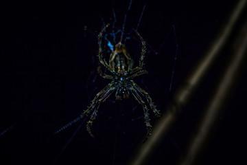 Manu National Park, Peru - August 10, 2017: Wild spider in the Amazon rainforest of Manu National Park, Peru