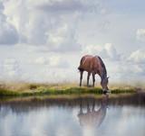 Brązowy koń w pobliżu wody - 180944133