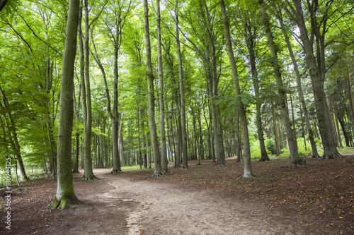 Tuinposter Weg in bos Spaziergang im Wald, Umweltbewusster Umgang mit der Natur