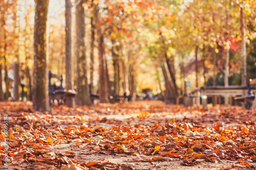 Fotografie, Tablou autumn park background, yellow leaves in fall season