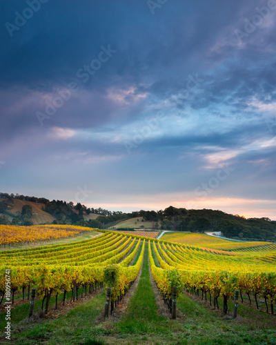 Photo sur Aluminium Vignoble Fruit of the Vines