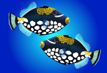 Digital Illustration Of A Triggerfish