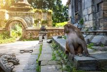 Monkeys In Pashupatinath Templ...