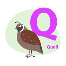 Zoo ABC Letter With Cute Quail...