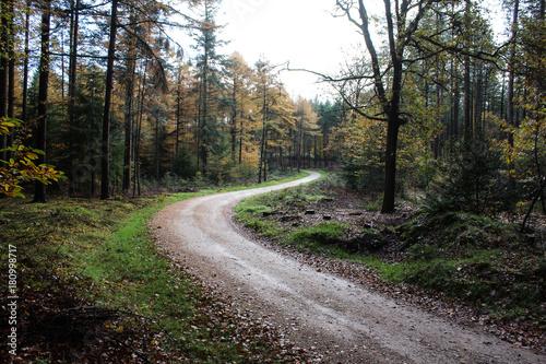 Tuinposter Weg in bos Forest in autumn, Utrechtse heuvelrug