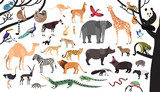 Fototapeta Fototapety na ścianę do pokoju dziecięcego - Collection of exotic animals and birds living in savannah and tropical forest or jungle isolated on white background. Set of cute cartoon characters. Flat bright colored vector illustration.