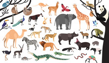 Collection Of Exotic Animals A...