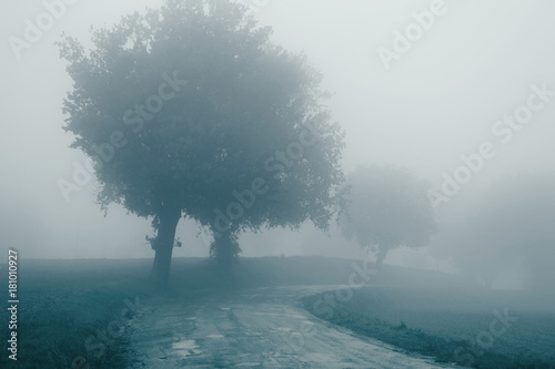 Tuinposter Groen blauw Landscape in the autumn mist, trees and road