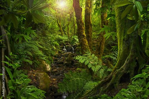 Foto op Canvas Weg in bos Asian tropical rainforest