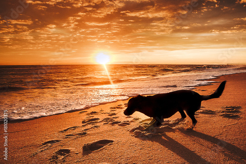 dog walk on beach at sunrise Wallpaper Mural